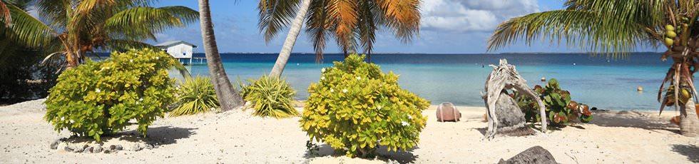 Manihi Insel