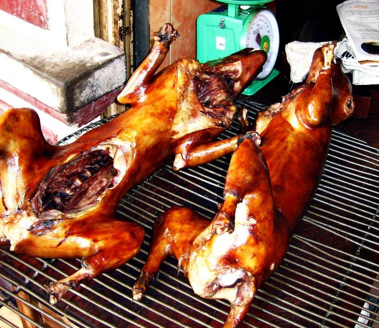 Dogs Eat Rotten Meat
