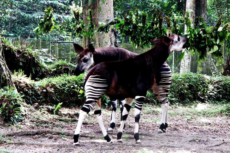 the okapi wildlife reserve