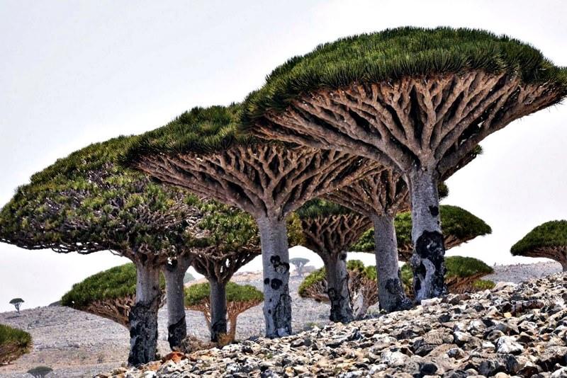 Sokotra Insel