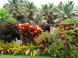 Aitutaki Atoll, Cookinseln