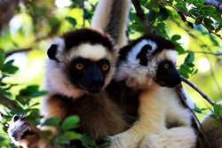 Andohahela National Park, Madagascar