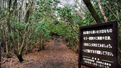 Bosque de Aokigahara Jukai