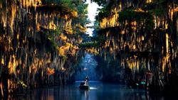 Caddo Lake, USA