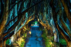 Dark Hedges, Ireland