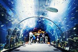 Dubai Aquarium, VAE