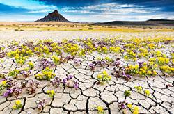 Top 11 Most Unusual Deserts on the Planet