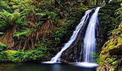 Gondwana-Rainforests Australiens, Australien