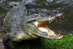 Hartley Crocodile Adventure Farm, Australia