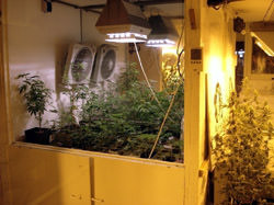 Hash Marihuana Hemp Museum, Die Niederlande