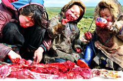 Igunaq Deer Meat in Chukotka, Russia