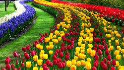 El Festival de Tulipanes, Turquía