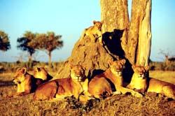 Kavango-Zambezi Conservation Area, Angola - Botswana - Zambia - Zimbabwe - Namibia