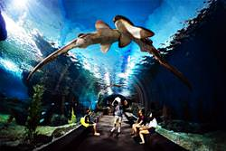 The coolest and largest oceanariums in the world