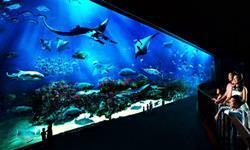 Meerestierpark, Singapur