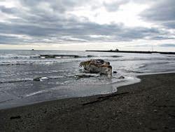 Nom Beach, United States