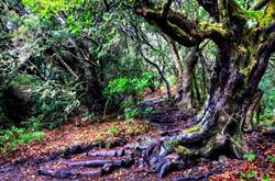 Национальный парк Гарахонай, Испания