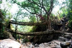 Root Bridges, India