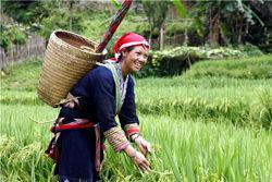 Племя Рук, Вьетнам