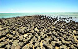 Залив Акул, Австралия