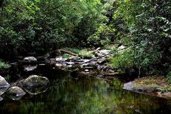 Sinharaja Naturschutzgebiet