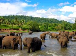 Sinharaja Naturschutzgebiet, Sri Lanka