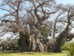 Sunland Baobab Bar, South Africa