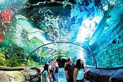 Аквариум в Сиднее
