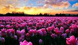 The Skagit Valley, USA