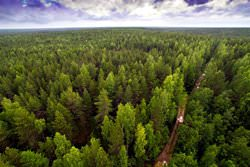 Virgin Komi Forests, Russia