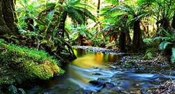 Wet Tropics of Queensland, Australia