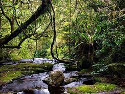 Wet Tropics of Queensland, Australia