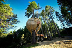 Yellow Treehouse Cafe, New Zealand