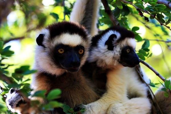 Nationalpark Andohahela, Madagaskar