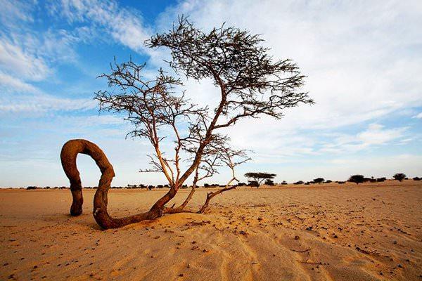 Nationalpark Banc d'Arguin, Mauritania