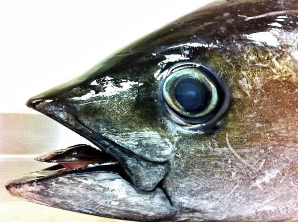 Eye of Tuna in Naha Restaurants, Japan