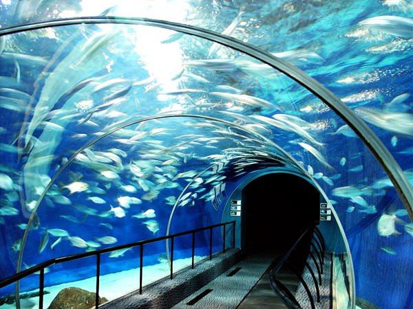 shanghai ocean aquarium schicke h user und hotels gebaut auf oder unter wasser. Black Bedroom Furniture Sets. Home Design Ideas