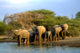 5 out of 15 - Great Limpopo Transfrontier Park, South Africa
