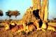 3 из 15 - Трансграничный заповедник Каванго-Замбези, Ангола - Ботсвана - Замбия - Зимбабве - Намибия