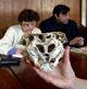 12 von 15 - Rhodope Schädel, Bulgarien