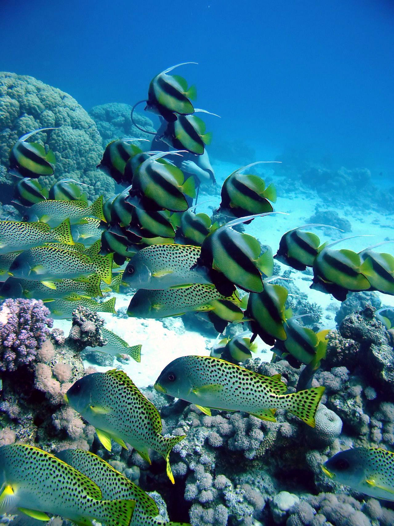 tropic fish - photo #38