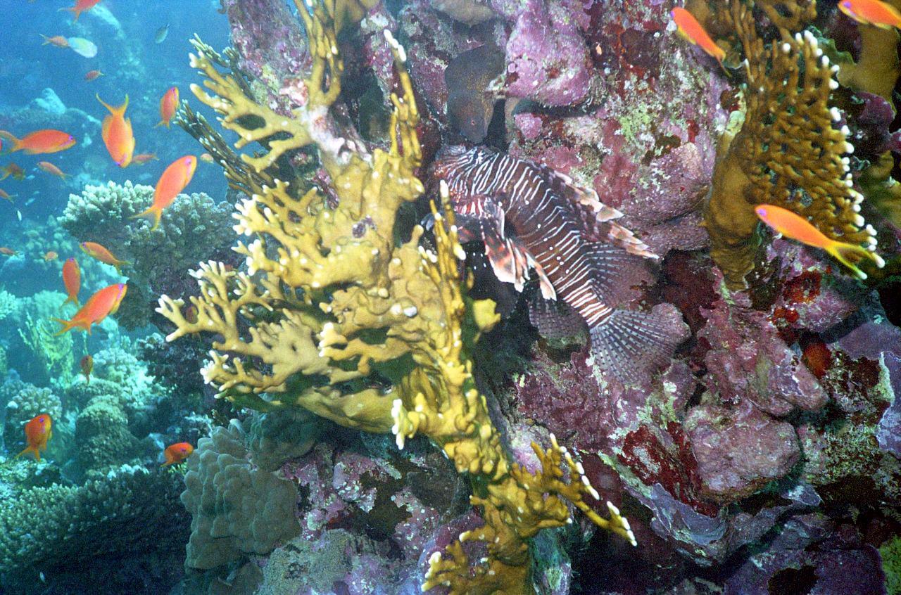 Подводный мир (25 фото)