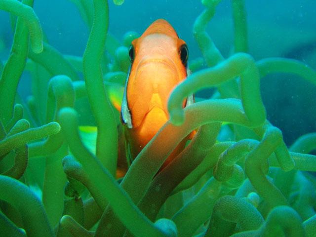 Мы рекомендуем Вам. рыбы.  Просмотров: 2766 Метки. животные. maxcore. зарегистрироваться. природа.