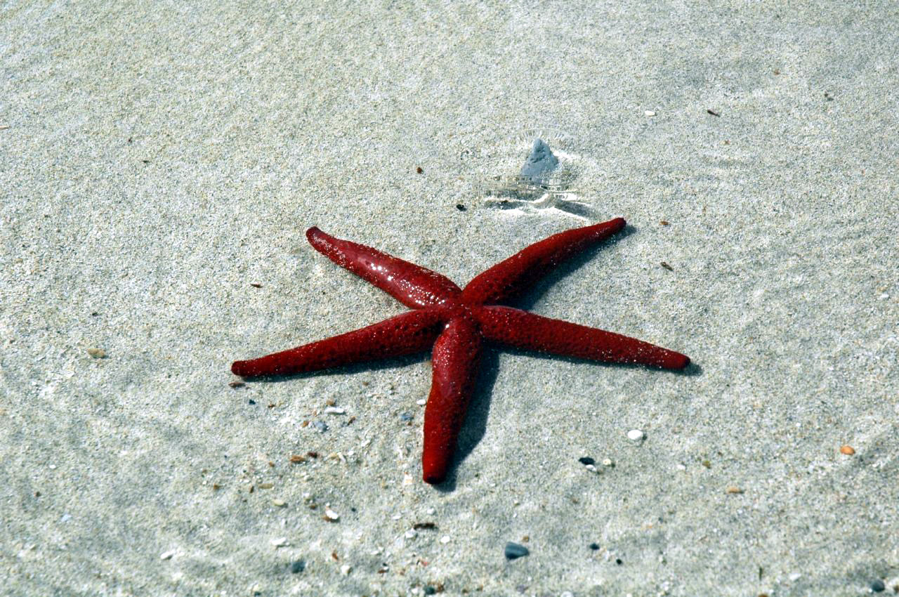 Red Star on The Beach Wallpaper
