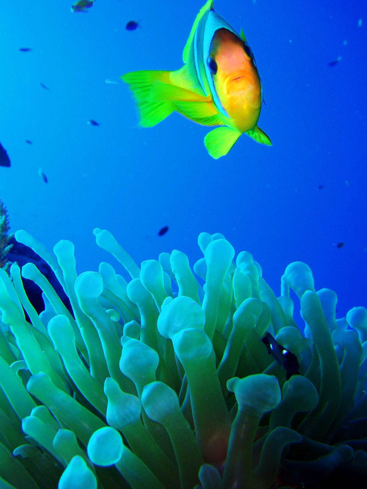 Tropical Fish Foto