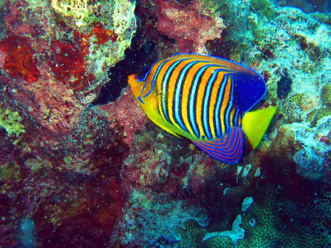 Diving Foto Large Underwater Pictures Of Tropical Fauna